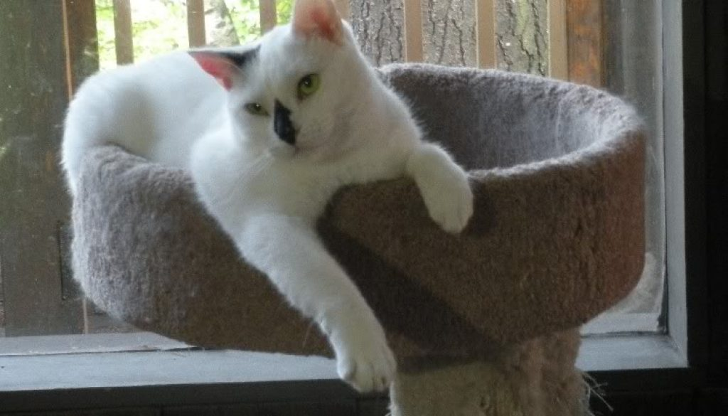 Lilycat2.jpg