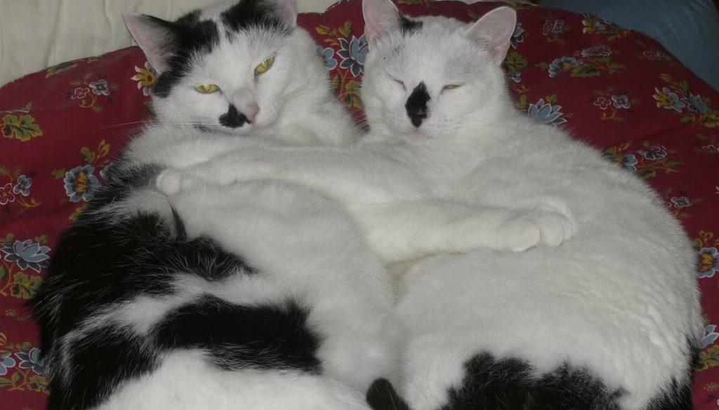 cats_071.jpg