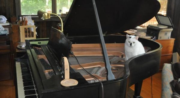 Lily in Piano